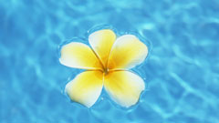 Flower on Water